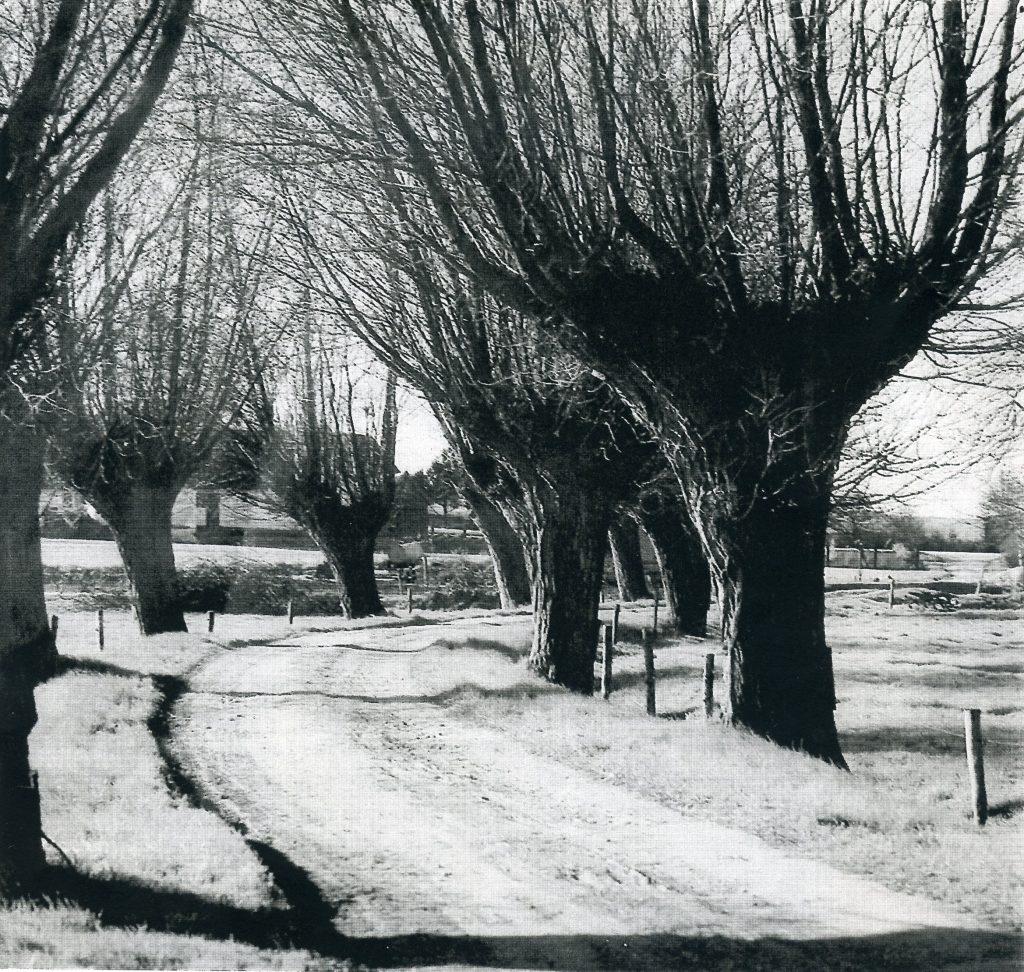 Den gamle Mernvej, da træerne endnu stod der